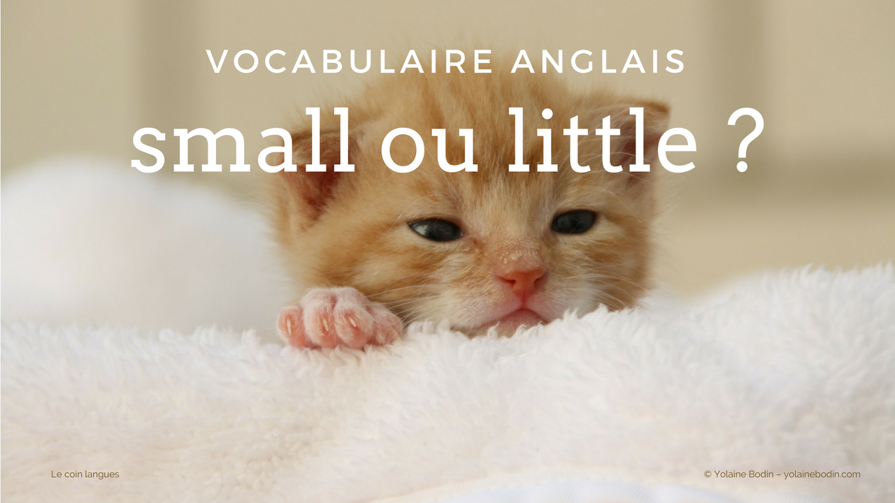 small ou little : quelle différence ?